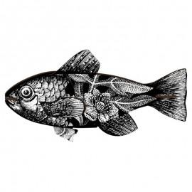 MIHO pesce Vertigo
